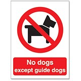 Image of Stewart Superior No Dogs Except Guide Dogs Self Adhesive Sign Ref P091SAV