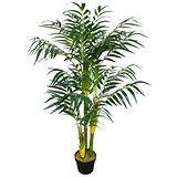 Image of Amazon Areca Bamboo Palm Plant