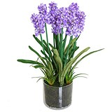 Image of Purple Lavender Plant With Decorative Pot