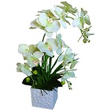 Image of Stunning Orchid Display Plant With Pot