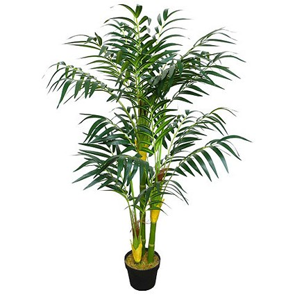 Amazon Areca Bamboo Palm Plant Paperstone
